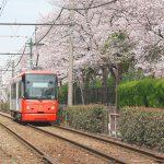 東京都荒川区内の都電荒川線(東京さくらトラム)沿線も桜が見頃になっています! #地域ブログ #荒川区 #Locketsリレー2018春