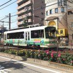 都電荒川線(東京さくらトラム)の町屋駅前から町屋二丁目間のバラがみごとに咲いています!(2018年4月29日撮影) #地域ブログ #荒川区のはなし #荒川区