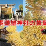 南千住の素盞雄神社では最高に美しい黄葉の風景が見られます! #地域ブログ #荒川区のはなし #荒川区