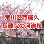 都電通り沿いにある寳蔵院の河津桜が見頃を迎えています #地域ブログ #荒川区のはなし #荒川区