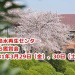 平成31年(2019年)3月29日(金)、30日(土)に三河島水再生センターにてさくら鑑賞会が開催