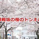 日暮里駅北口の御殿坂には桜のトンネルがある!谷根千散策のスタートに最適ですよ #地域ブログ #荒川区のはなし #荒川区