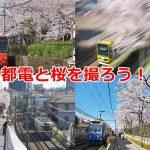 東京さくらトラム(都電荒川線)の荒川二丁目停留所近辺は都電と桜の撮影スポットが目白押し! #地域ブログ #荒川区のはなし #荒川区 #桜