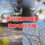 西日暮里の諏方神社の厳かな空気の中でゆったり桜を見よう #地域ブログ #荒川区のはなし #荒川区 #桜