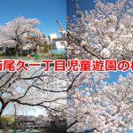 西尾久一丁目児童遊園の桜があまりに立派で美し過ぎた! #地域ブログ #荒川区のはなし #荒川区 #桜