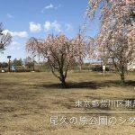 【荒川区の動画】尾久の原公園で満開の枝垂れ桜の下を散歩してみる #地域ブログ #荒川区のはなし #荒川区 #荒川区の動画 #桜