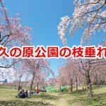 尾久の原公園の枝垂れ桜の様子(2019年4月2日撮影) #地域ブログ #荒川区のはなし #荒川区