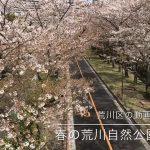 【荒川区の動画】春の荒川自然公園を散歩しながらタイムラプス動画を撮影してみた #地域ブログ #荒川区のはなし #荒川区 #荒川区の動画 #桜