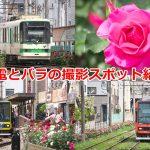 荒川区内で都電とバラを一緒に撮影できる場所はどこ?東京さくらトラム(都電荒川線)の三ノ輪橋-町屋駅前編 #地域ブログ #荒川区のはなし #荒川区
