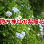 西日暮里の諏方神社脇にある地蔵坂で紫陽花を見よう! #地域ブログ #荒川区のはなし #荒川区