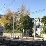 尾久八幡神社のみごとな黄葉 #地域ブログ #荒川区のはなし #荒川区