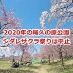 2020年4月に開催予定だった尾久の原公園のシダレザクラ祭りは新型コロナウイルス感染症拡大防止の観点から中止 #地域ブログ #荒川区のはなし #荒川区