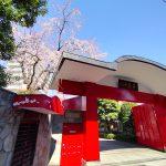 東京都荒川区東尾久にある満光寺の桜が咲き始めました #地域ブログ #荒川区のはなし #荒川区