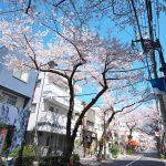 東京都荒川区西日暮里にある冠新道商興会の桜並木はそろそろ見頃
