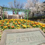 荒川区立荒川五丁目公園にある3本の桜