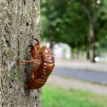 夏は東京都荒川区の尾久の原公園でセミの抜け殻探しをするのが楽しい!
