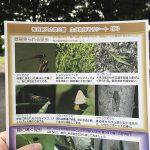 東京都荒川区の尾久の原公園で2020年秋バージョンの生き物探そうシートが配布開始