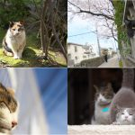 2月22日は「にゃんにゃんにゃん」で猫の日!荒川区内で出会った猫を紹介します