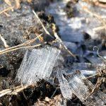 寒い冬の朝は尾久の原公園で霜柱を探そう!