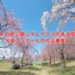 令和3年度の「尾久の原公園シダレザクラのある風景」写真コンクールの作品募集中