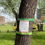 尾久の原公園内で倒木の危険性がある樹木の伐採が行われます