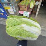 フードロスを救え!東尾久の鈴木商店にて北足立市場で破棄予定だった巨大な白菜を1個100円で販売しました