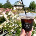 宮前公園のバラを眺めながらアラカワイイビレッジでテイクアウトしたアイスコーヒーを飲む