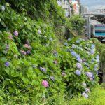 西日暮里にある諏方神社では紫陽花と鉄道の風景を見ることができる!