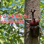 【2021年版】荒川自然公園内にある昆虫観察園でカブトムシが見られるのは8月1日(日)まで!