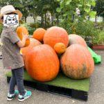 尾久の原公園に茨城県からやって来た超巨大なカボチャが展示中!